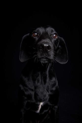 Hundefoto Koeln5