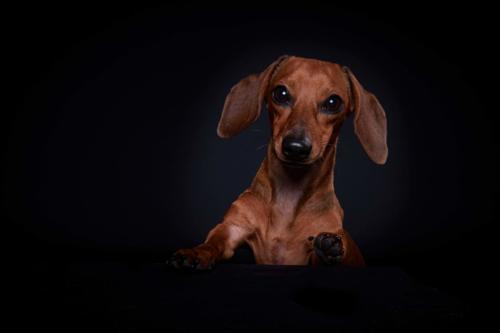Hundefoto Koeln70