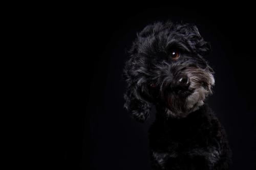 Hundefoto Koeln71