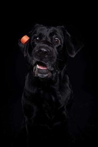 Hundefoto Koeln8