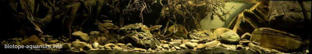Cuộc thi hồ Biotope