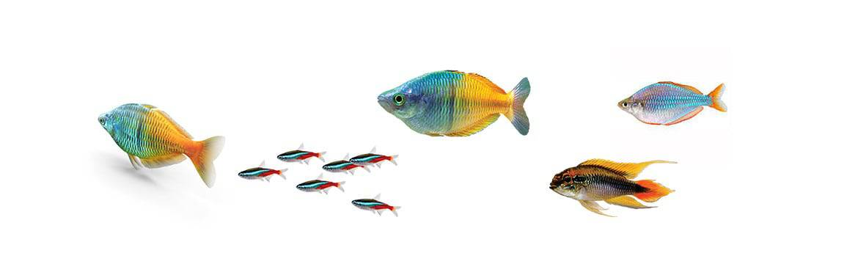 Cá thủy sinh