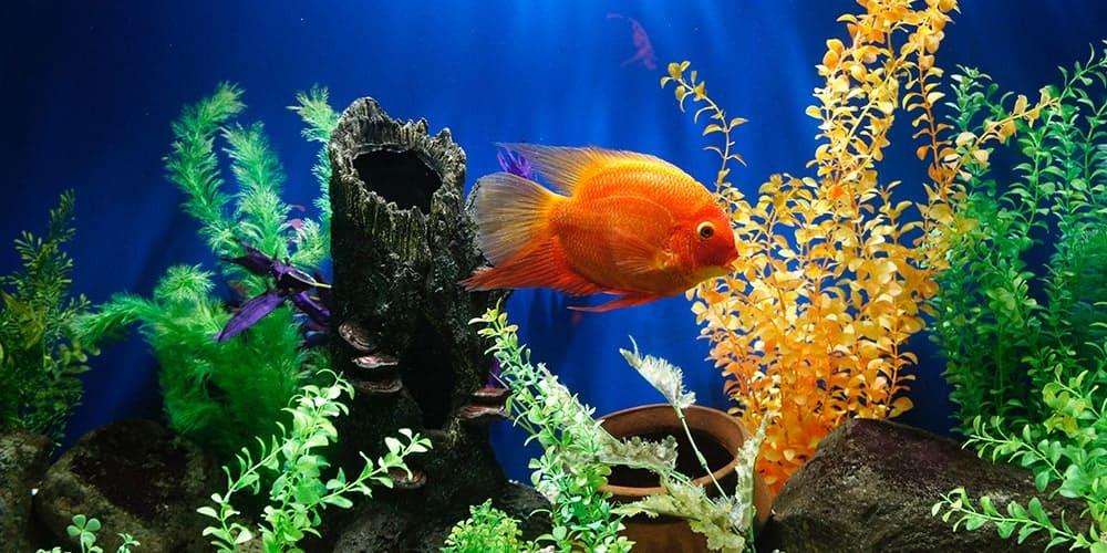 first aquarium