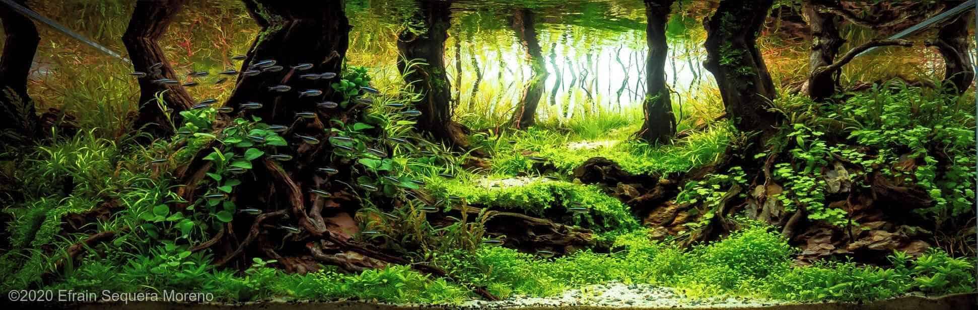 AGA 2020 - Aquatic Garden >320L