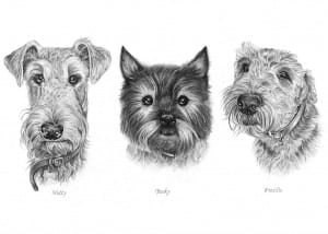 Pencil Portraits of Dogs