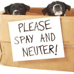 Neutering is the removal of an animal's reproductive organ which means your pet can't breed. In this age of growing pet population, neutering animal is the most viable solution.