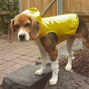 WoofBox Blog - Dogs in Rains