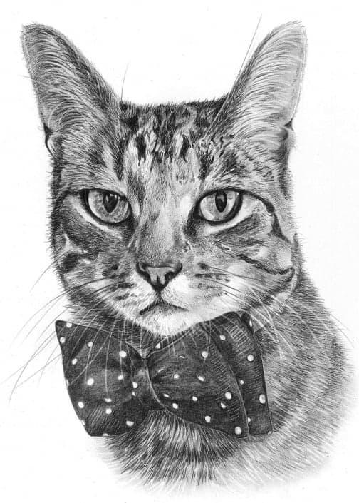 Pencil Sketch Portrait of Cat