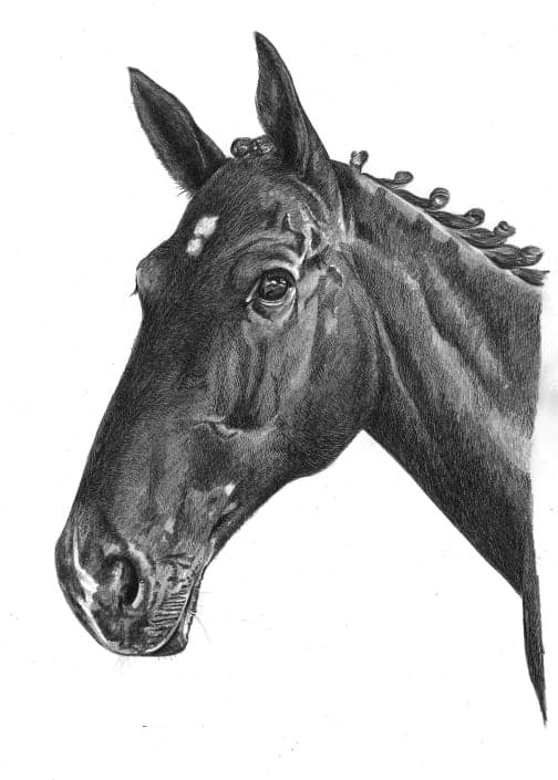 Portrait Drawing of Horse