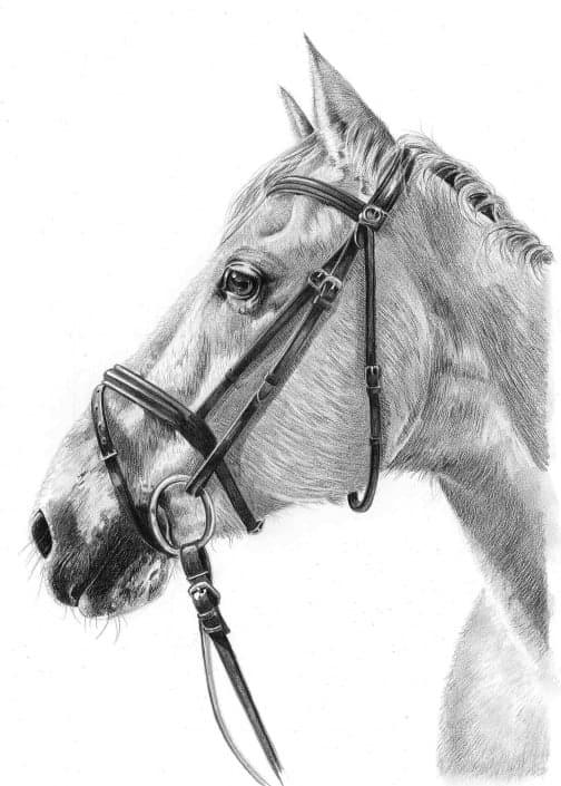 Portrait Sketch of Horse