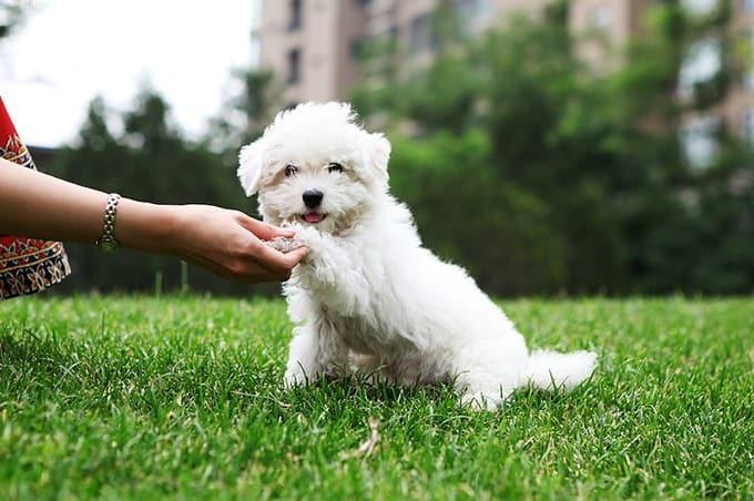 small dog academy