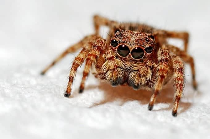 Get Rid of Spiders Naturally and KEEP