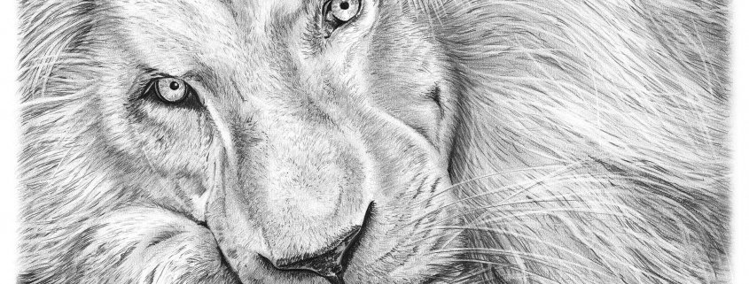 Pencil Drawing of Haldir the White Lion