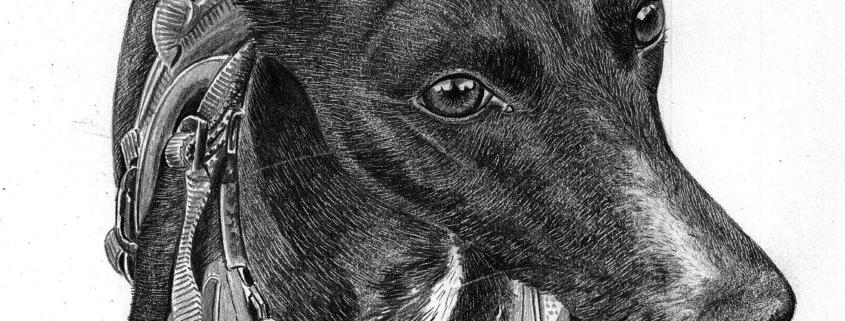 Pencil Portrait of Greyhound