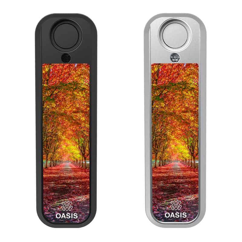Autumn Tree Drive