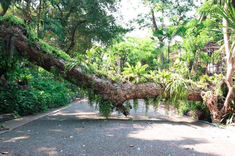 Fallen tree across a road  blocking your path forward