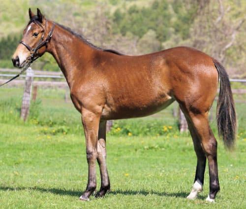 【マルカジュリエットの19】(牝)~血統診断-馬場・距離適性-~ターファイトクラブ