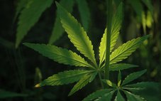 Marijuana Oil Helps 3-Year-Old Son Beat Cancer, Dad Says