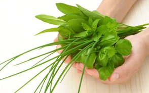 basil and herbs