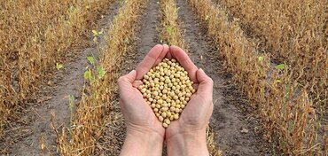 Are Farmers Being Manipulated Into Buying GMO Soybean Seeds?