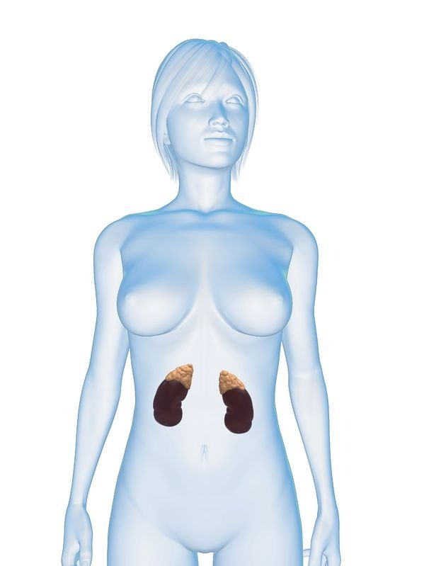Image from: www.endocrineweb.com/