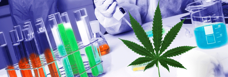 Marijuana Backed By More Studies Than Most FDA Approved Pharma Drugs