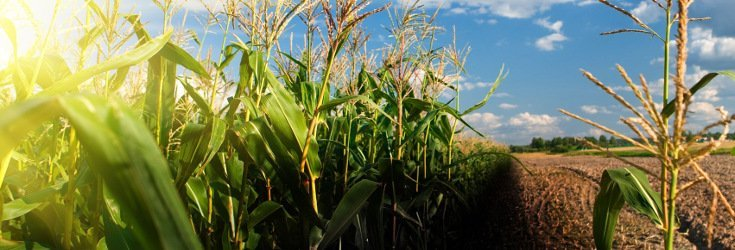 As Americans Reject Monsanto, Organic is Booming Like Crazy