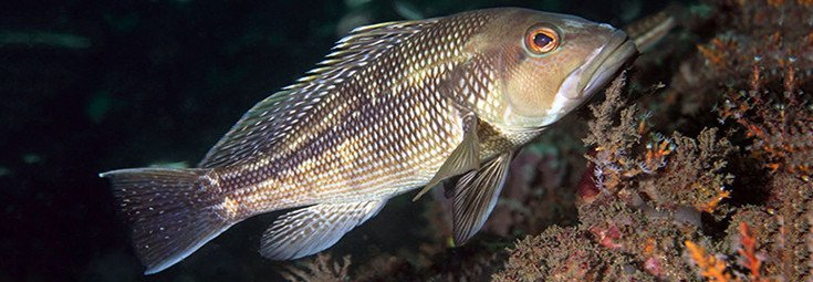 Studies: Chemicals in the Water 'Turning Male Fish into Females'