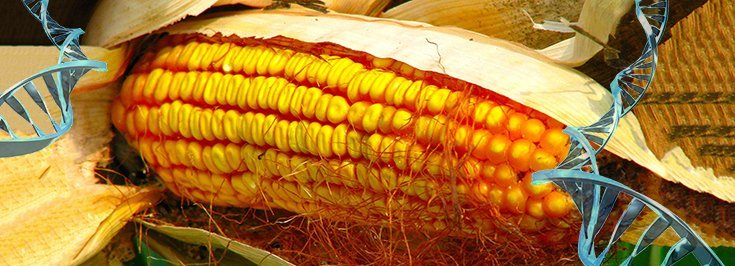 In Case You Missed It: EPA Quietly Approved Monsanto's RNAi Genetic Engineering Technology