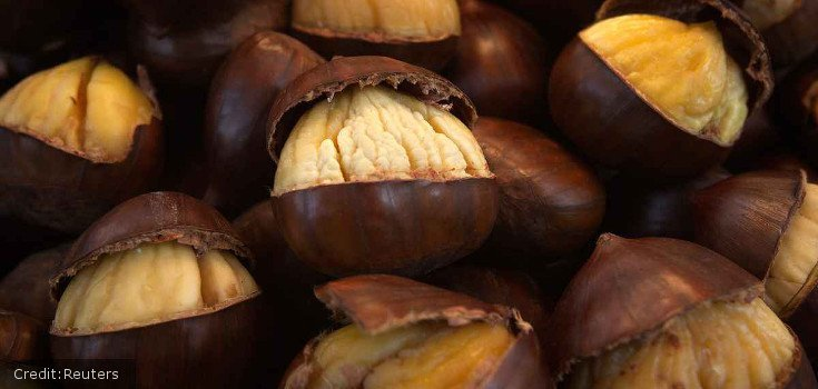 US Government May Soon Approve GMO Chestnuts