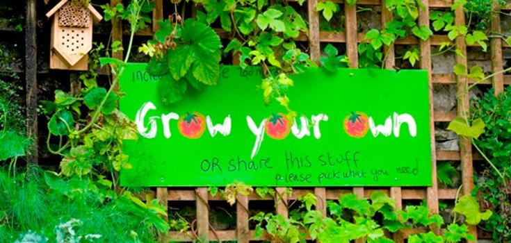 Self-Sustaining Town Grows Vegetables in Most Unlikely Places