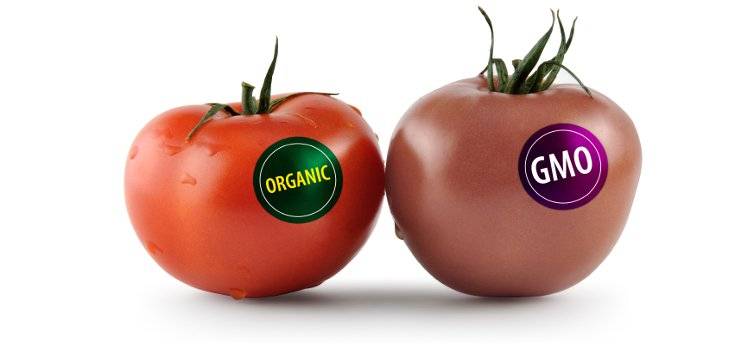 Poll: GMOs Among 'Most Popular Topics' Of The year