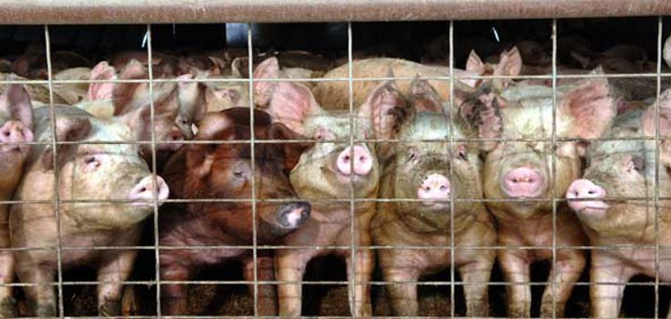 Ag-Gag Bill to Protect Employers from Whistleblowers
