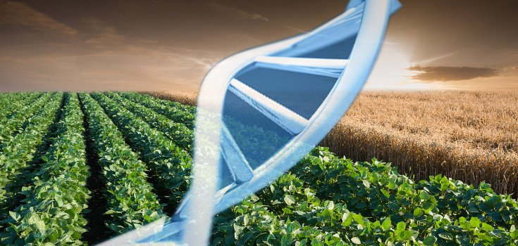 Study: Children Exposed to GMO Soy Pesticides Suffer 'Serious Genetic Damage'