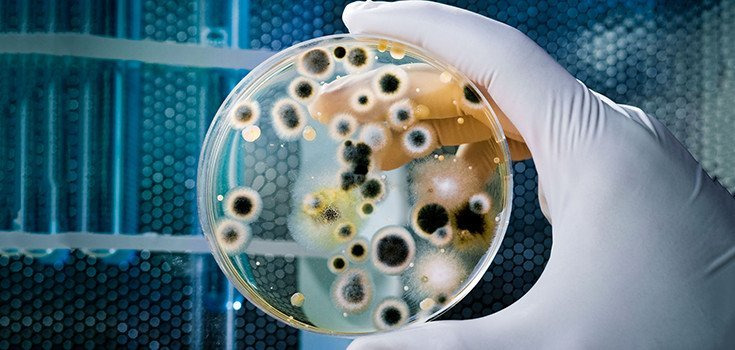 Bacteria Resistant to ALL Drugs Shows up in Denmark