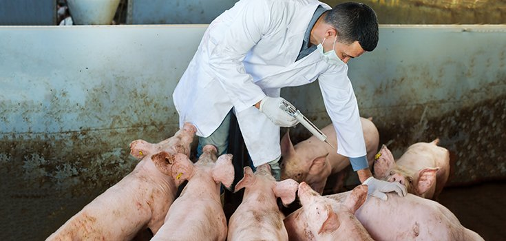 WHO Strongly Urges Farmers to End Routine Antibiotic Use in Farm Animals