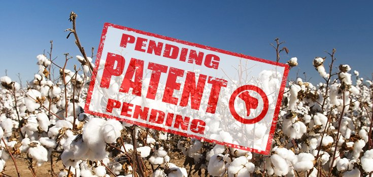 India High Court Rules Monsanto Can't Have Bt Cotton Patent