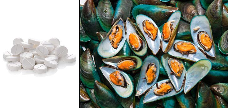 Seafood Scare: Mussels are Now Testing Positive for Opioids