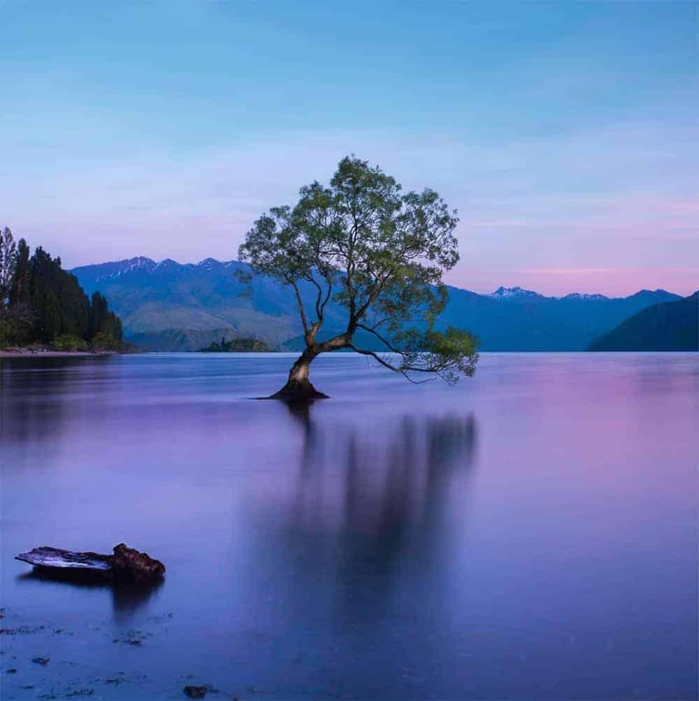 New Zealand Photo of Wanaka Tree