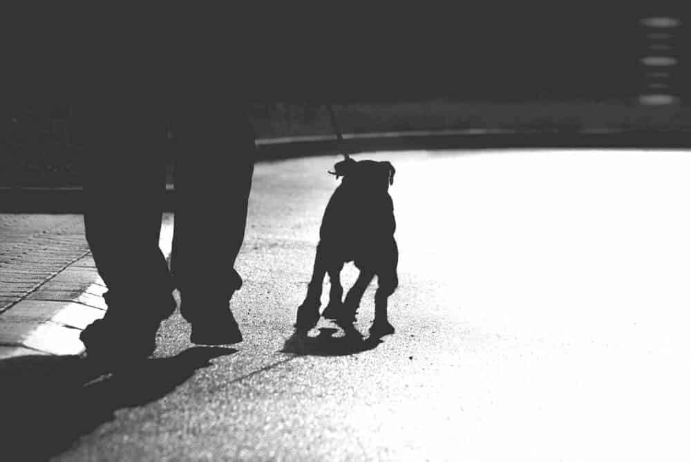 dog walking on the street