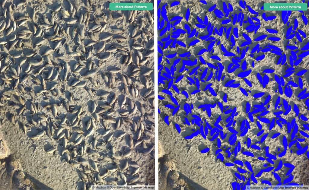 Researchers from the University of Santa Cruz, California, used Picterra to detect and count sea lions and seals living on Año Nuevo Island from imagery. Source: Picterra.