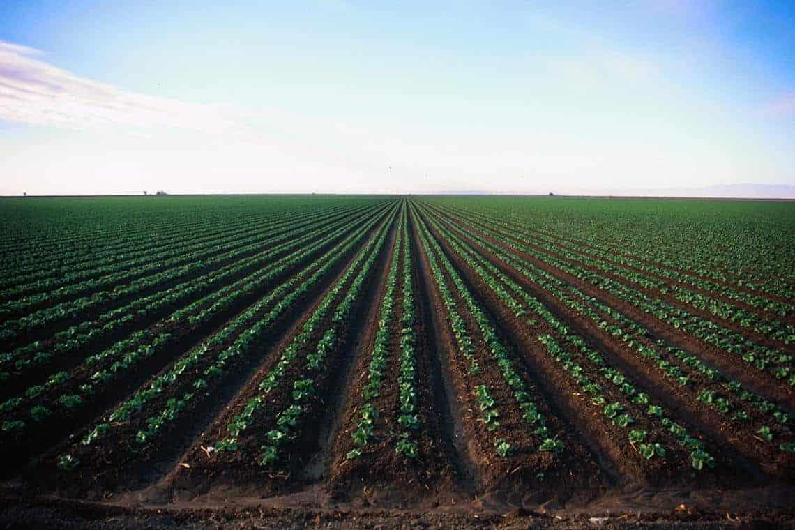An agriculture field in California. Photo: U.S. Geological Survey. Public domain