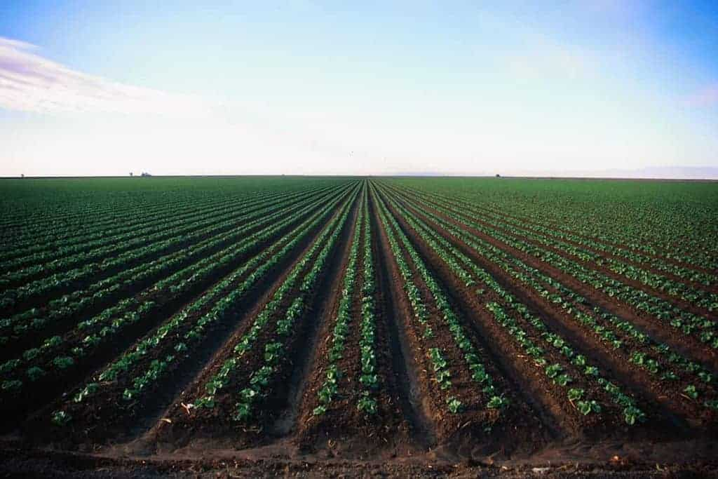 Photo of a field in California growing rows of crops.