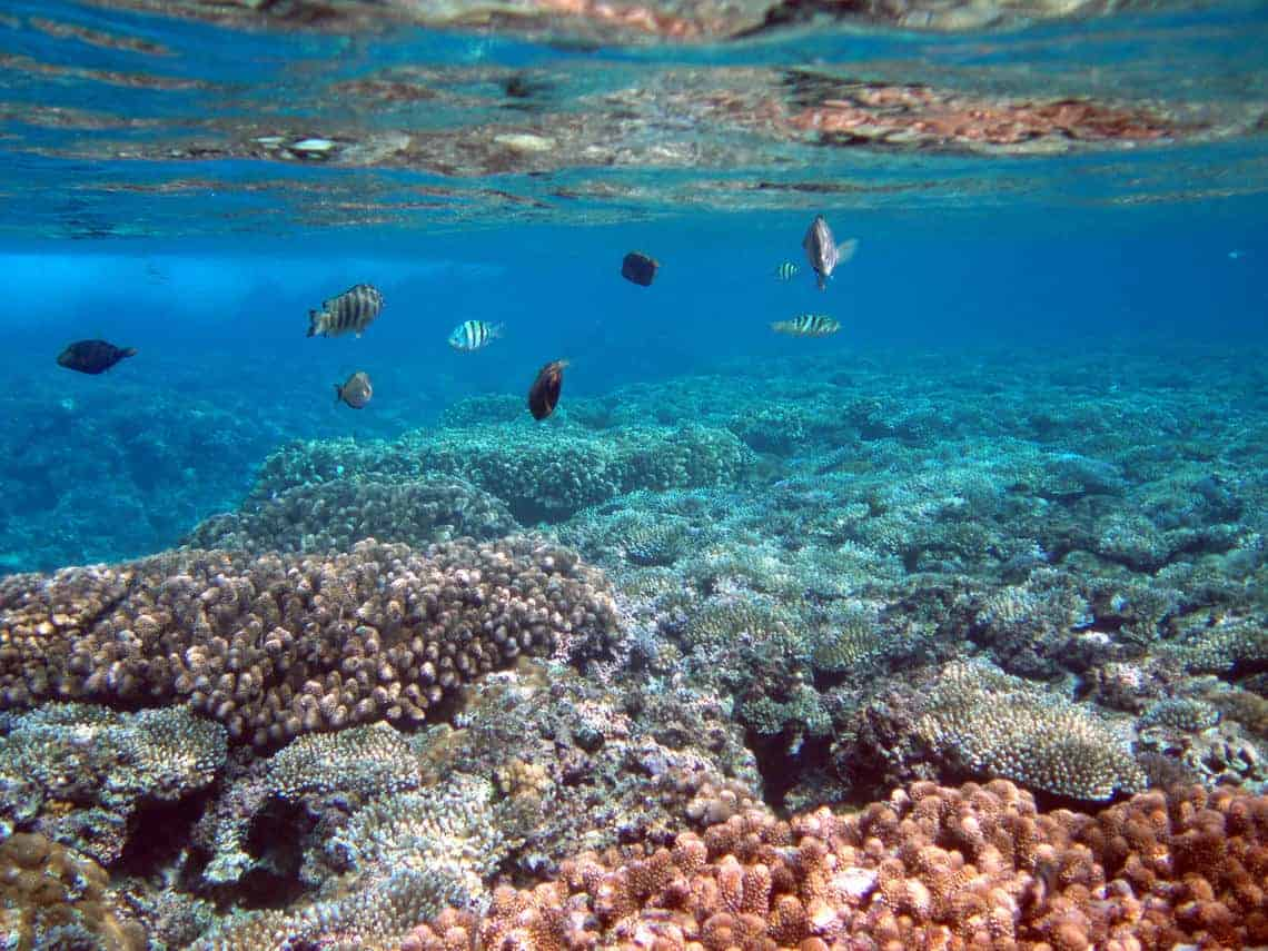 Underwater photograph of Tumon Bay Marine Reserve, Guam, showing some of the amazing biologic diversity of coral reefs. Photo: Curt Storlazzi, USGS Pacific Coastal and Marine Science Center. Public domain.