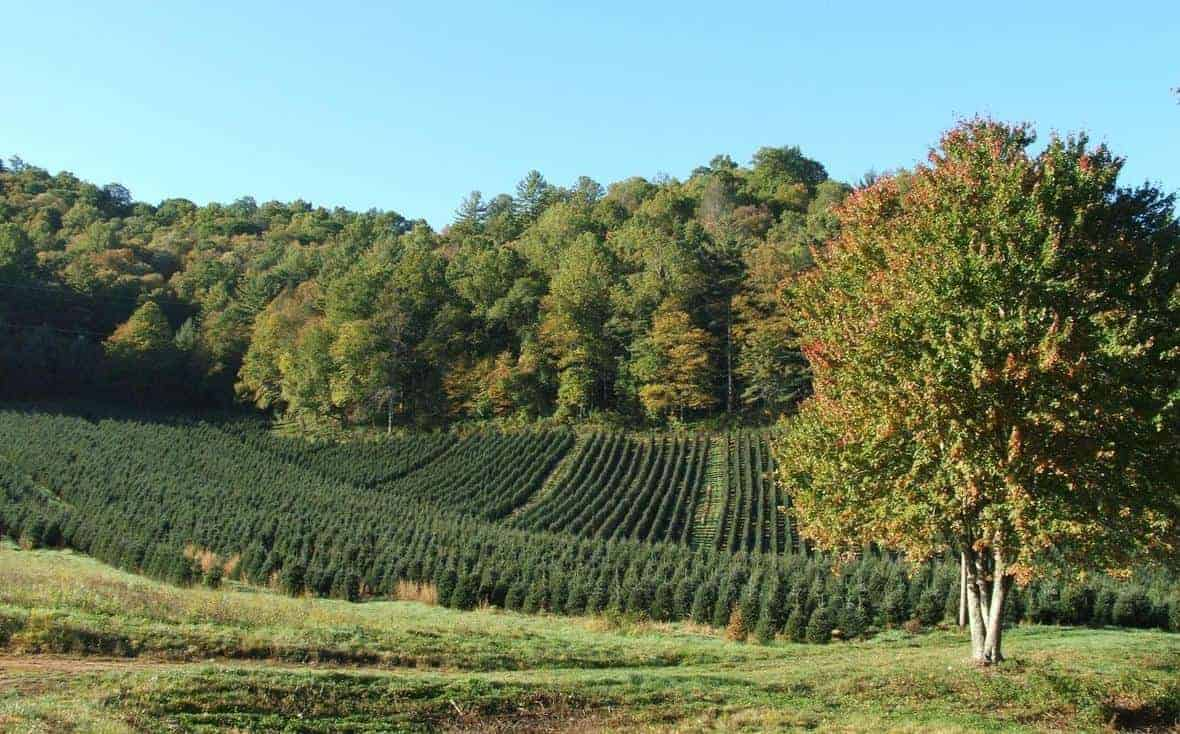 A Christmas tree farm in the mountains of western North Carolina.  Photo: Randolph Femmer, USGS. Public domain.
