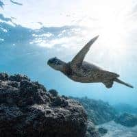Underwater Photography: Best Tips for Beginners