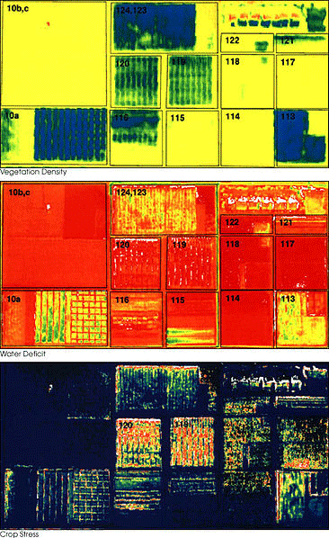 The images above were acquired by the Daedalus sensor aboard a NASA aircraft flying over the Maricopa Agricultural Center in Arizona on January 30, 2001.