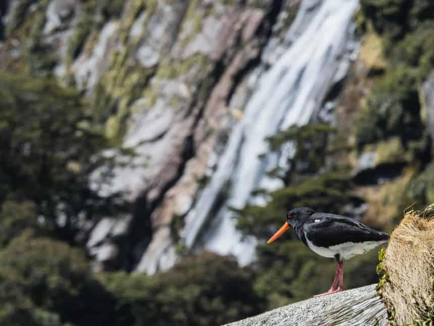Understanding Camera Autofocus   Lone Bird