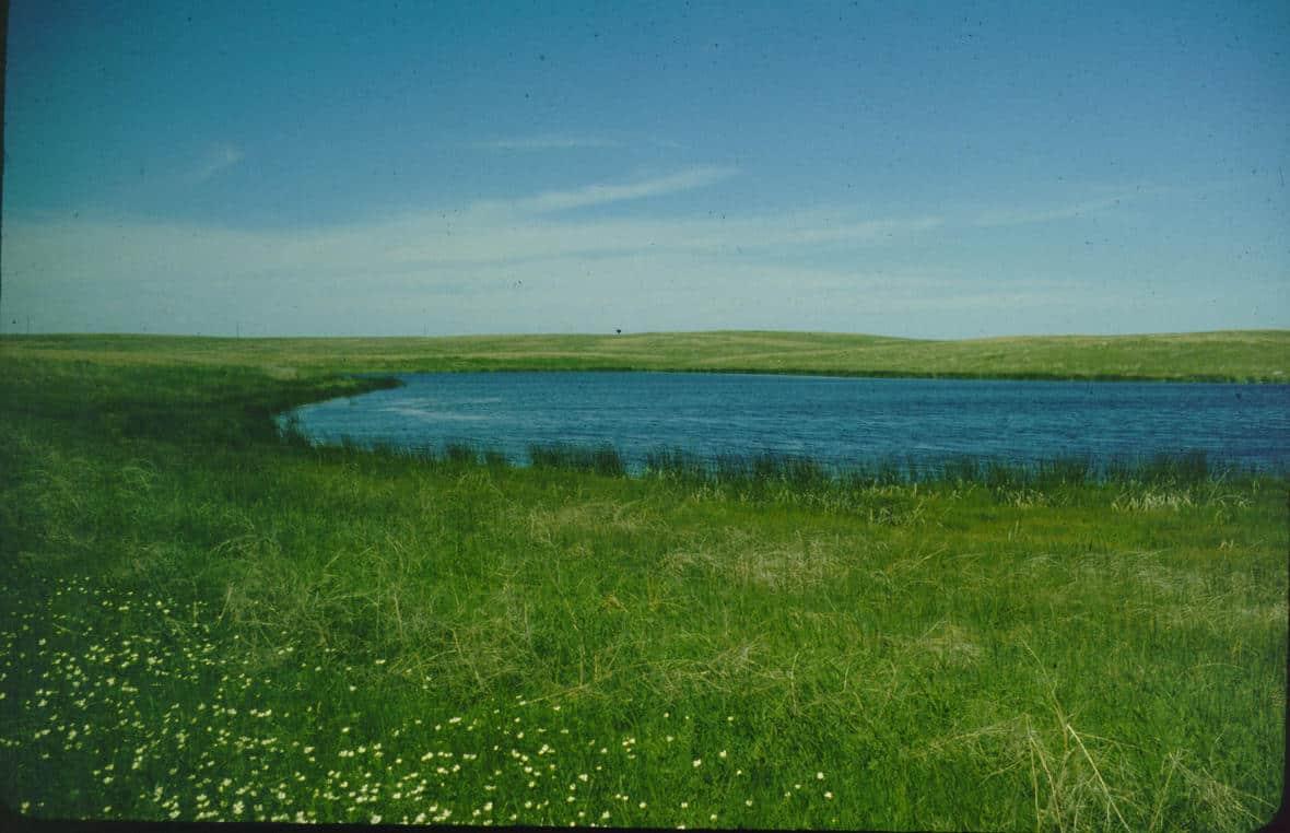 A prairie wetland at Ordway Prairie near Aberdeen, South Dakota. Photo: W. Carter Johnson, U.S. Geological Survey. Public domain.