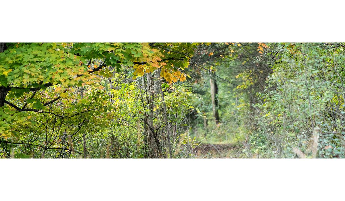 A Fall Path At Matthaei John Metzler Gatewayextension
